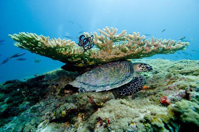 želva u korálů