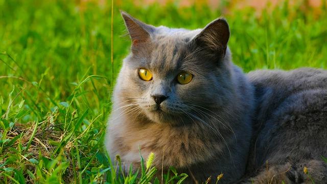 kočka na trávě.jpg