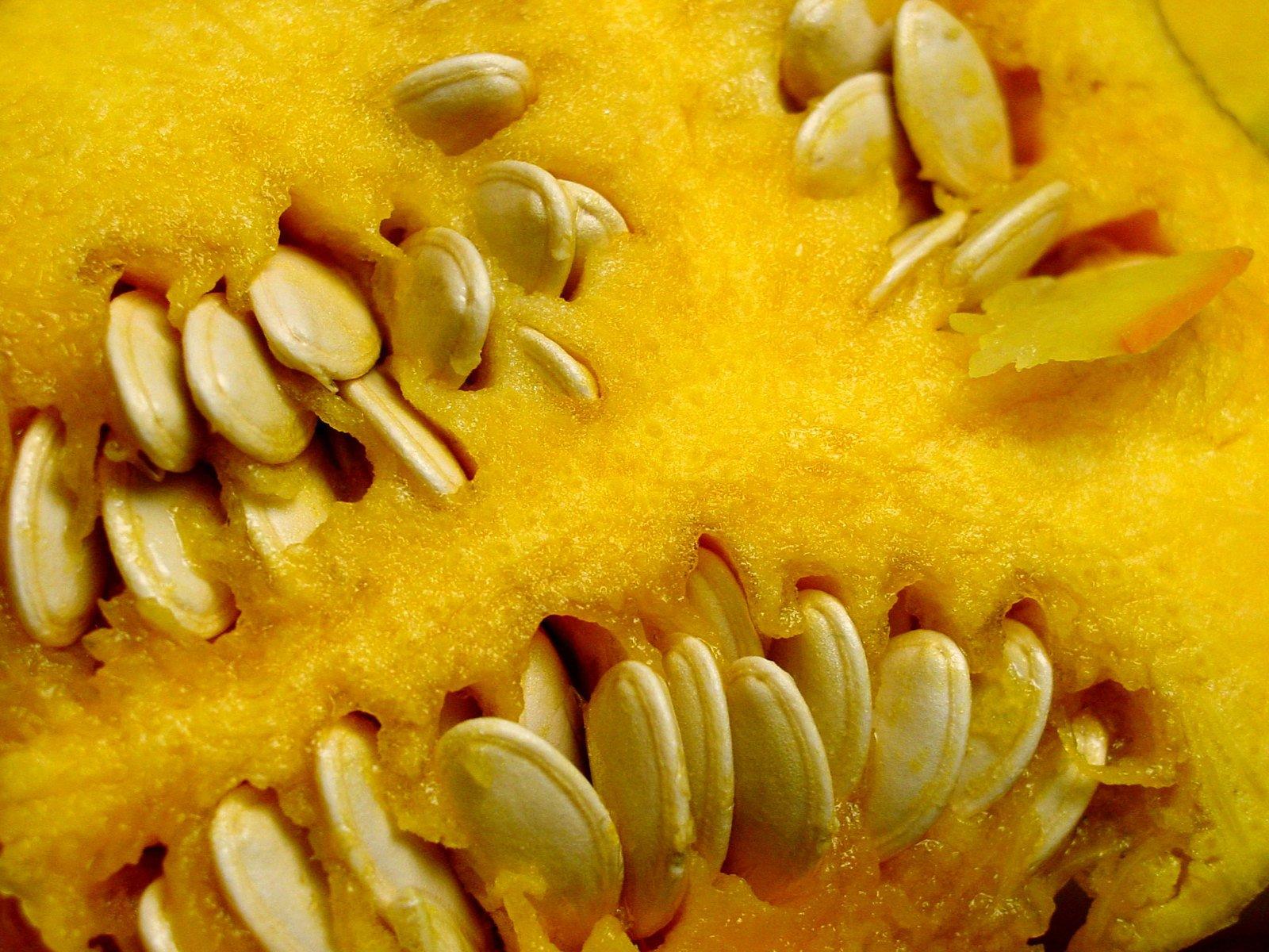pumpkin-seeds-1510686